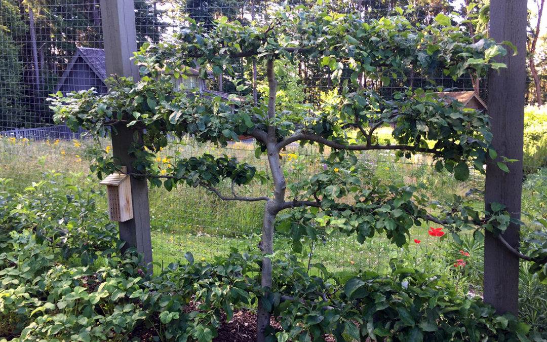 Gently summer prune for bountiful branches