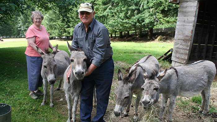 Hee-haw and goodbye: Wildwood donkeys to a new home